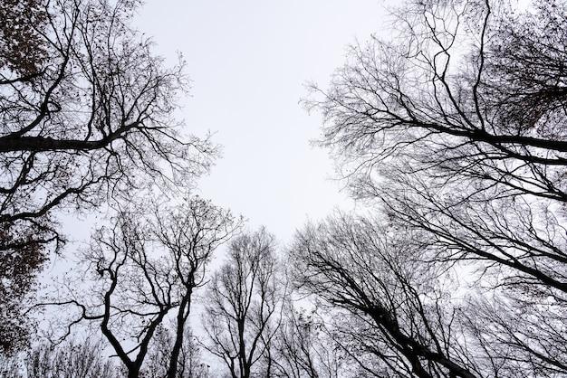 Nagie korony drzew na tle nieba