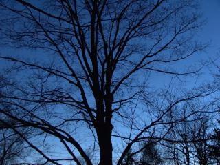 Nagie noc drzew, gałęzie