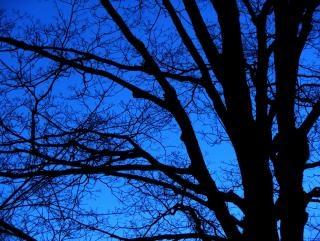 Nagie noc drzewa, zachód słońca
