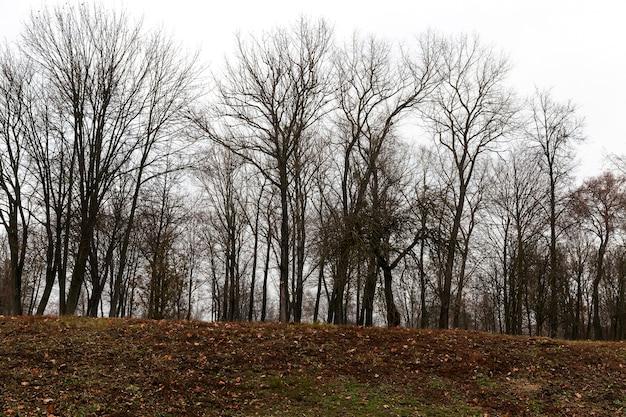 Nagie pnie drzew w parku późną jesienią. drzewa rosną na wzgórzu. na ziemi leżą opadłe liście. na tle błękitnego nieba.