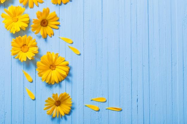 Nagietek kwitnie na błękitnym drewnianym tle