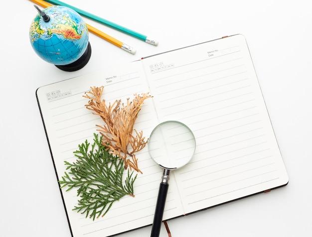 Najlepsze rośliny na notebooku