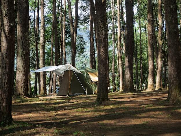 Namiot kempingowy w lesie sosnowym