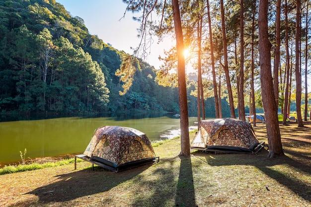 Namioty kempingowe pod sosnami ze światłem słonecznym nad jeziorem pang ung, mae hong son w tajlandii.