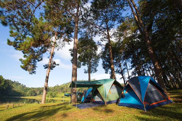 Namioty na trawniku.