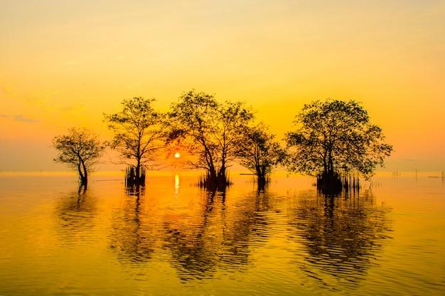 Namorzynowi drzewa w jeziorze z pomarańczowym niebem na wschodzie słońca przy pakpra wioską, phatthalung, tajlandia