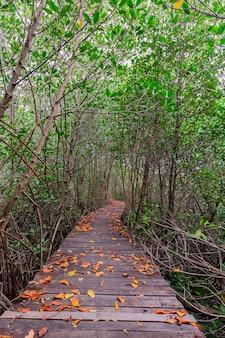 Namorzynowy las w petchaburi prowinci, tajlandia