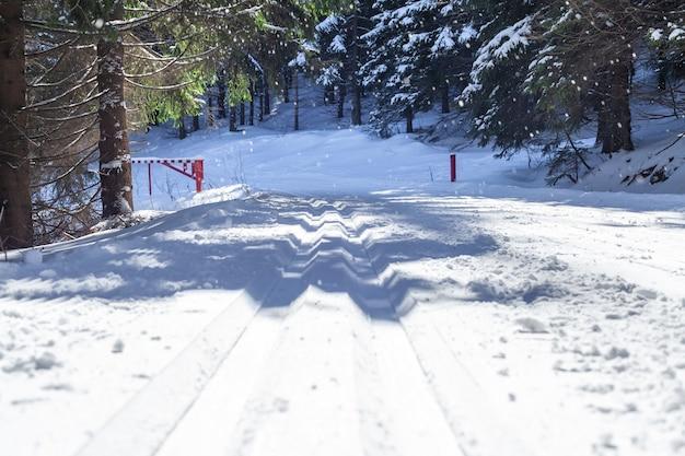 Narciarstwo biegowe w zimowym, zaśnieżonym lesie