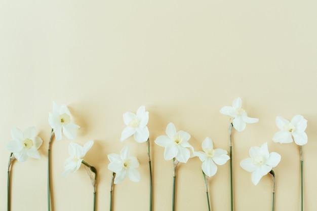 Narcyz kwiat na pastelowym tle