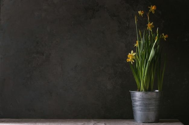 Narcyz kwiaty żonkila