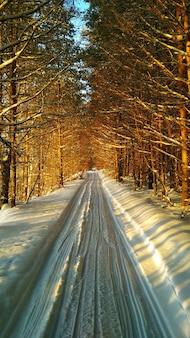 Narty w zimowym lesie