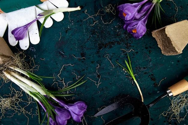 Narzędzia ogrodnicze, doniczki torfowe, kwiat krokusa. wiosna