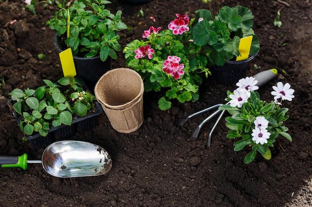 Narzędzia ogrodnicze i kwiaty w doniczce do sadzenia na podwórku.
