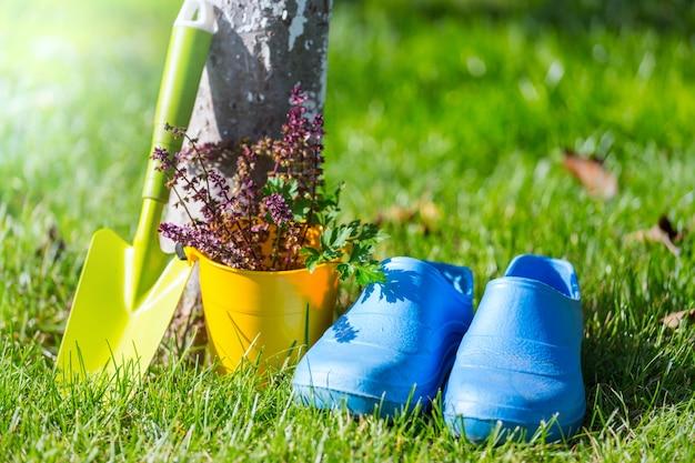 Narzędzia ogrodnicze i warzywa w zielonej trawie w sezonie jesiennym. słoneczny dzień.