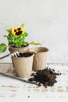 Narzędzia ogrodnicze z doniczkami torfowymi i glebą do sadzenia żółtej rośliny bratek