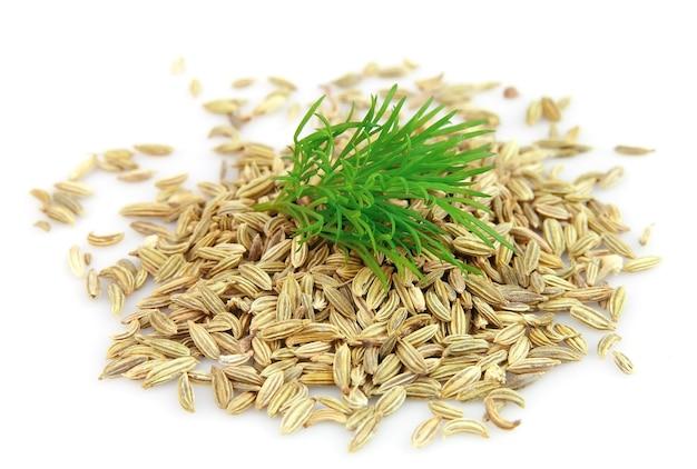 Nasiona i gałąź kopru na białym tle