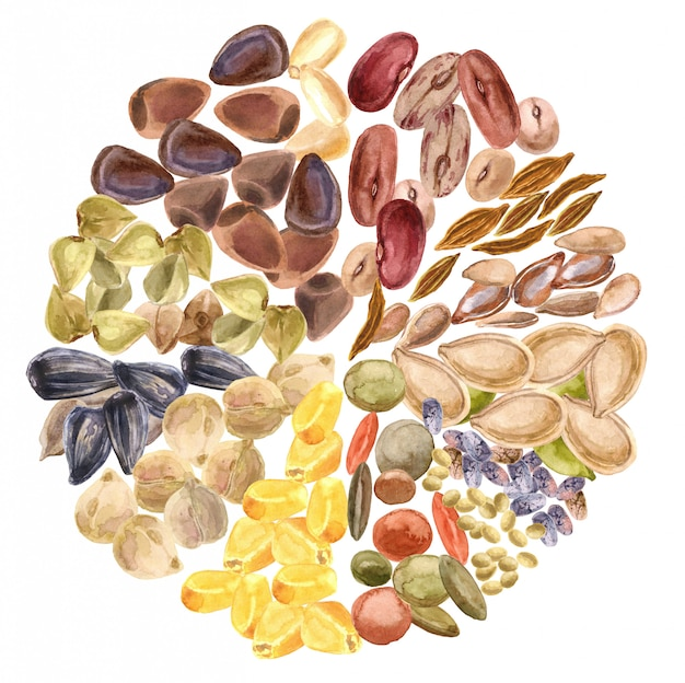 Nasiona izolowane. produkt bezglutenowy, zdrowa żywność, białko roślinne, dieta wegetariańska