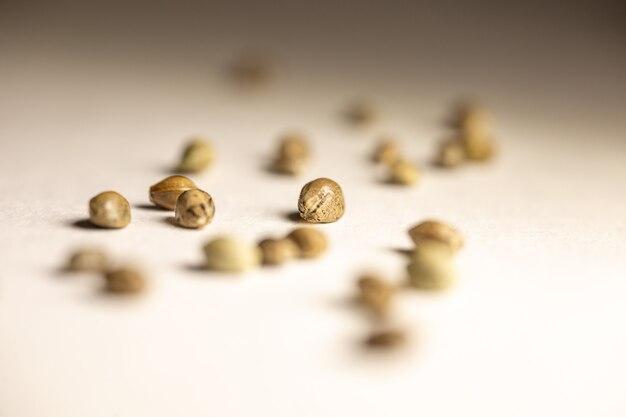 Nasiona konopi są rozrzucone na białym tle