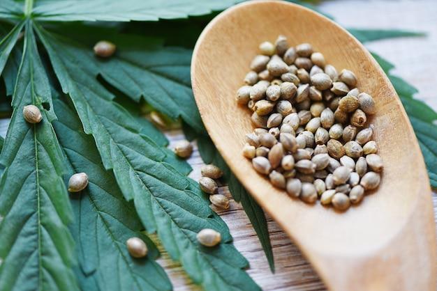 Nasiona marihuany na drewnianej łyżce i liść marihuany na drewnie - nasiona marihuany konopie medyczne