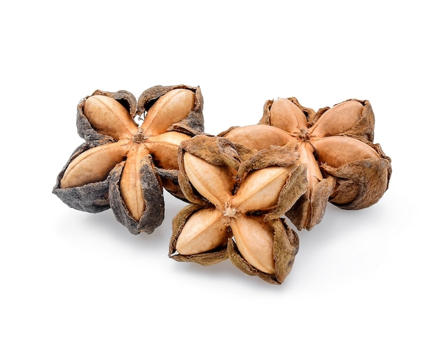 Nasiona orzeszków ziemnych sacha inchi na białym tle