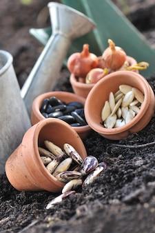 Nasiona w doniczkach do siewu