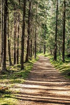 Nasłoneczniony trawnik i ścieżka w zielonym lesie, spacer na łonie natury.