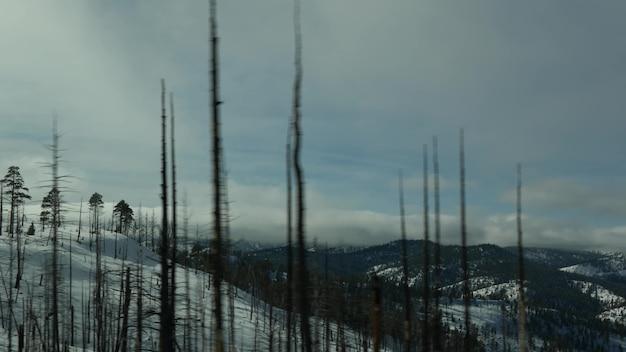 Następstwa pożaru lasu, spalone zwęglone drzewa w usa. czarny suchy, spalony, wypalony las iglasty po pożarze. spalone uszkodzone drewno w bryce canyon. klęska żywiołowa i katastrofa ekologiczna.