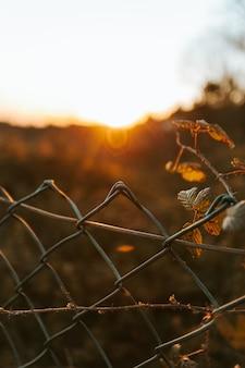 Nastrojowe ujęcie ogrodzenia z nieostrym tłem podczas zachodu słońca, inspirujące przestrzenią do kopiowania nastrojowe ujęcie ogrodzenia z nieostrym tłem podczas zachodu słońca, inspirujące przestrzenią do kopiowania
