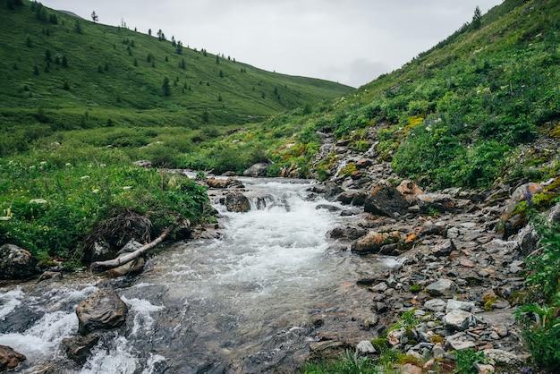 Nastrojowy krajobraz z dużymi kamieniami w górskiej rzece.