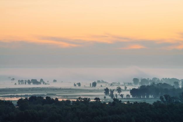 Nastrojowy krajobraz z lasem we mgle o wschodzie słońca