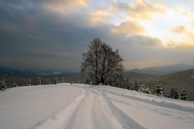 Nastrojowy krajobraz ze ścieżkami i ciemnymi gołymi drzewami pokrytymi świeżym opadłym śniegiem w zimowym lesie górskim w zimny mglisty poranek.