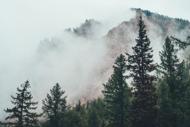 Nastrojowy upiorny ciemny las w gęstej mgle wśród wielkich gór.