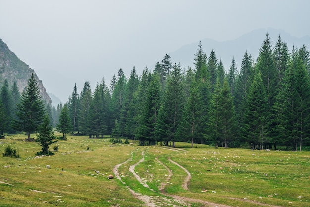 Nastrojowy zielony las krajobraz z polną drogą wśród jodeł w górach. sceneria z brzegiem lasu iglastego i skałami w lekkiej mgle. widok na drzewa iglaste i skały w lekkiej mgle. las górski