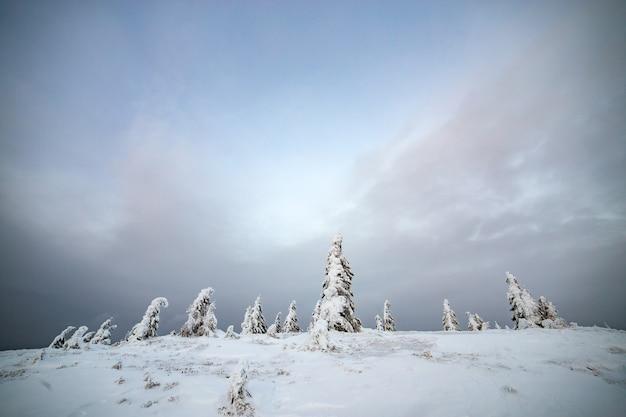 Nastrojowy zimowy krajobraz świerkowych lasów pokrytych głębokim białym śniegiem na mroźnych, zamarzniętych górach.