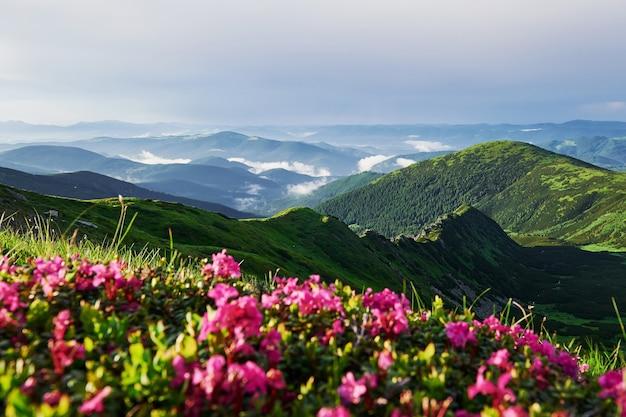 Nasycone kolory. majestatyczne karpaty. piękny krajobraz. widok zapierający dech w piersiach.
