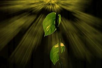 Natur zieleni tła drewniani światła słoneczne