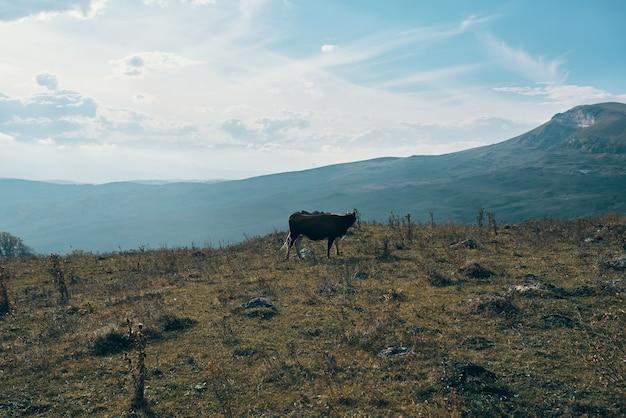 Natura góry krajobraz jesień sucha trawa błękitne niebo chmury zwierzęta