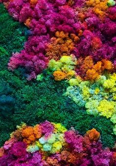 Natura kolorowy tło