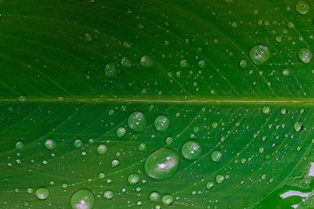 Natura kropla wody lub deszcz na zielonym tle liści
