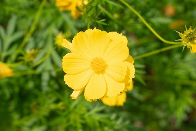 Natura, kwiat, tło