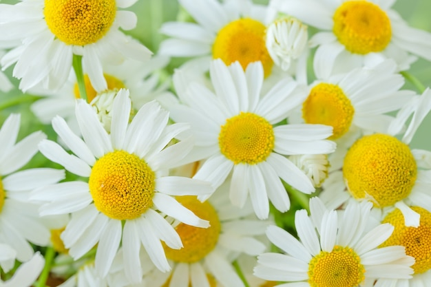 Natura lato tło rumianków