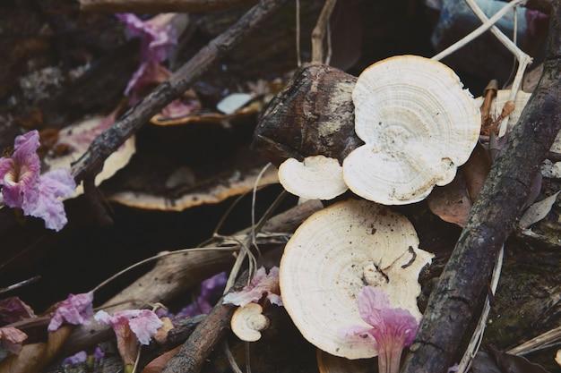Natura loguje się zbliżenie drewna grzybów