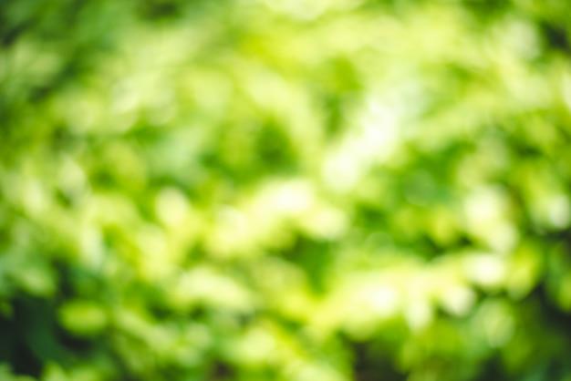 Natura niewyraźne zielone tło
