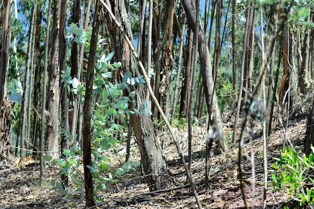 Natura piękny eukaliptus ładny miłość