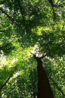 Natura. ścieżka w lesie ze światłem słonecznym