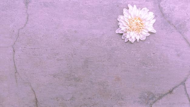 Natura tło białego kwiatu na starym cemencie ściennym