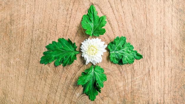 Natura tło białego kwiatu na starym drewnianym