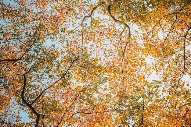 Natura tło jesienne liście tekstura rośliny w zbliżeniu