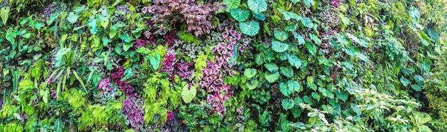 Natura tło z tropikalnych zielonych liści