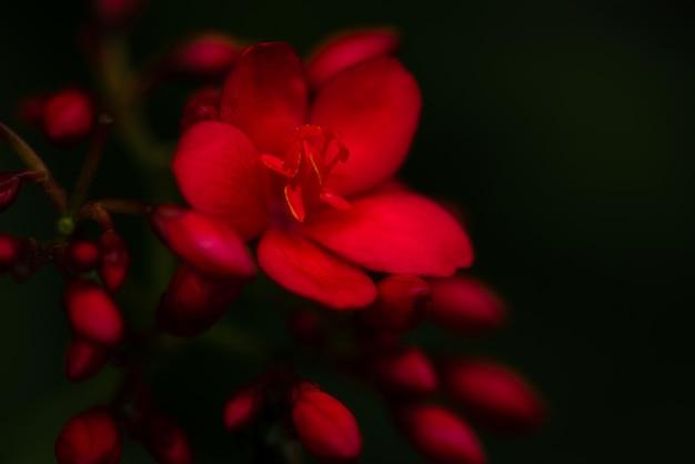 Natura widok czerwonych kwiatów na rozmycie tła w ogrodzie z kopią przestrzeni za pomocą czerwonego kwiatu tła naturalne rośliny krajobraz, natura tapety
